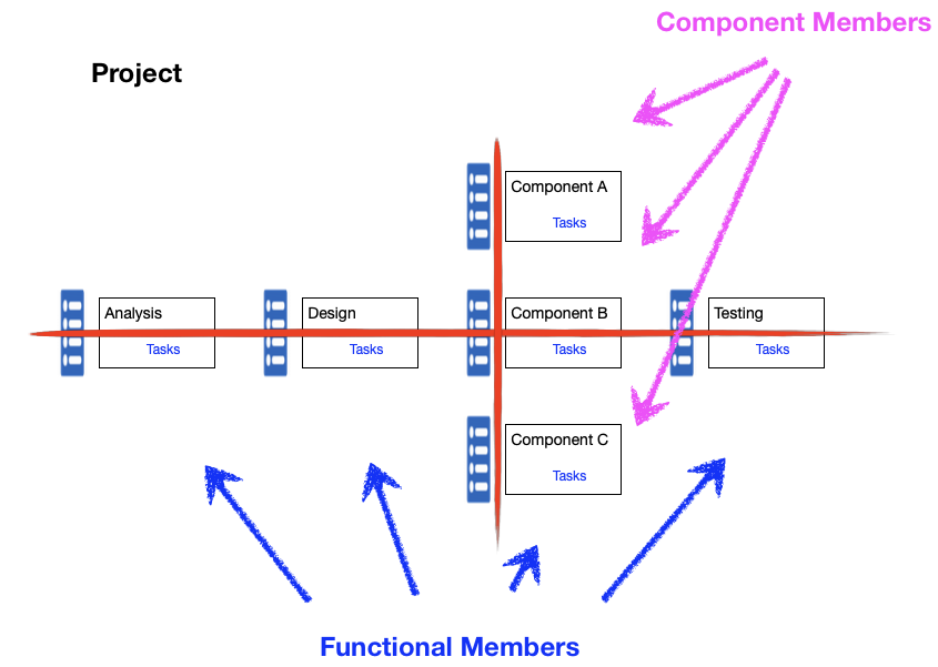 Functional and Component Members
